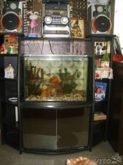 Продаю аквариум вместе с полкой