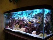 Изготовление аквариумов и террариумов любых размеров