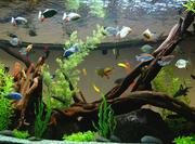 Ддизайн и сервисное обслуживание аквариумов.