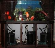 Срочно продаю полностью укомплектованный аквариум с тумбой и с рыбами