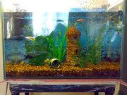 Продается аквариум 60 литров