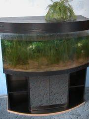Продам аквариум на 500 литров с тумбой