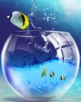 Аквариумы, рыбки, обслуживание