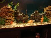 Продам в срочном порядке 3х золотых рыб. Большие,  откормленные.