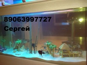 Услуги по аквариумистике(обслуживание аквариумов)