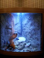 Купить аквариум в Тюмени